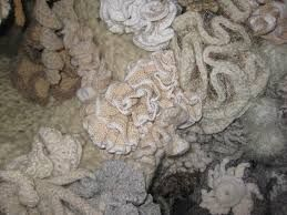 Image result for hyperbolic crochet coral reef