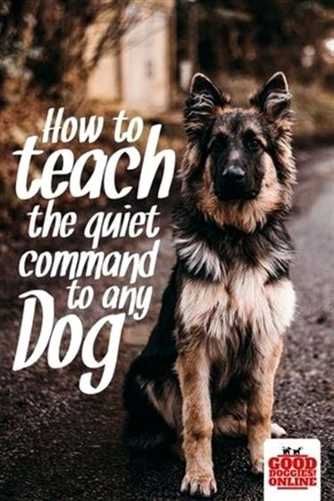 In Training Dog Vest Zak Dog Training Tricks Goldendoodle Dog
