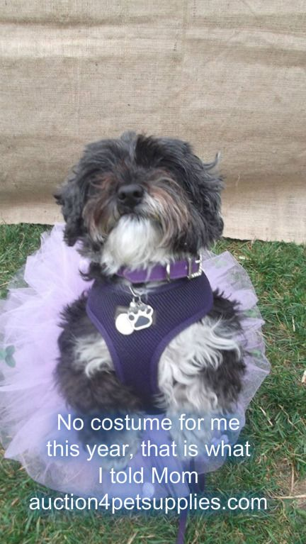 Happy Wednesday all, Our new blog is out : Wednesday waffling plus our Give Away - http://auction4petsupplies.com/laylaswoof.php