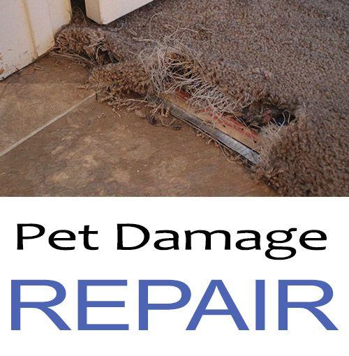 Pet Carpet Damage Repair San Diego Sandiegocarpetrepairandcarpetdying Com Carpet Repair How To Patch Carpet Carpet To Tile Transition