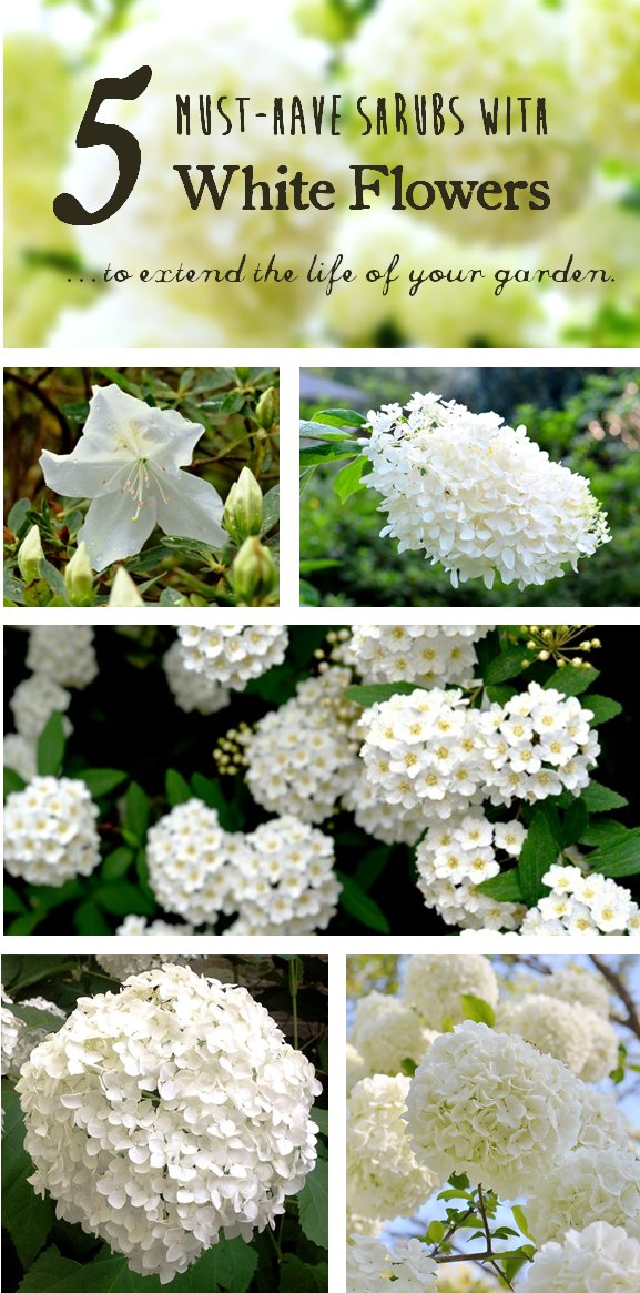 5 Must Have Shrubs With White Flowers To Extend The Life Of Your