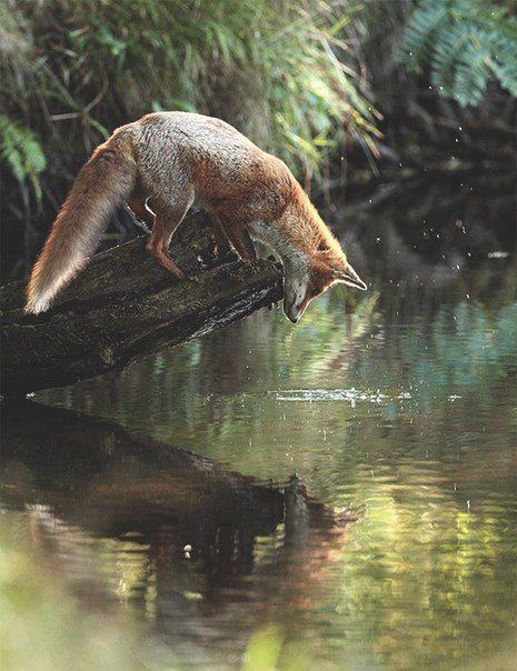 Title Mit Bildern Tiere Wild
