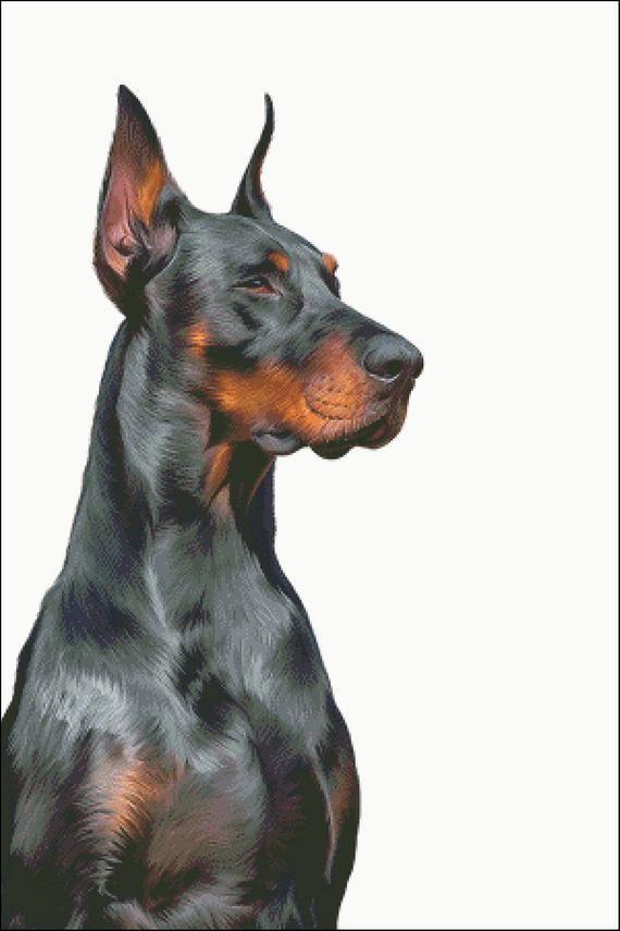 Doberman Counted Cross Stitch Pattern Doberman Doberman Dogs