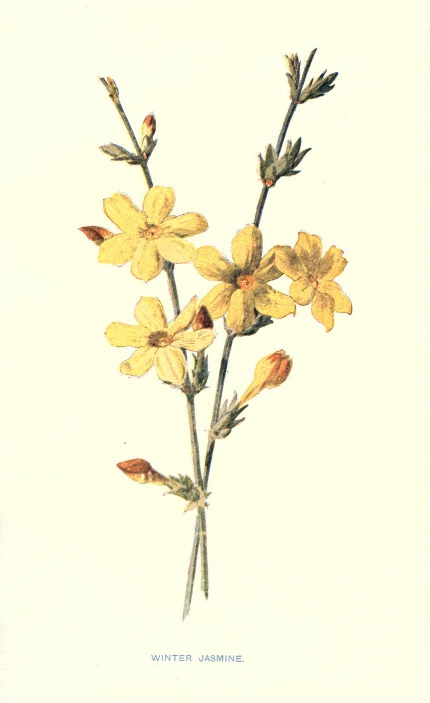 Familiar garden flowers, Biodiversity Heritage Library