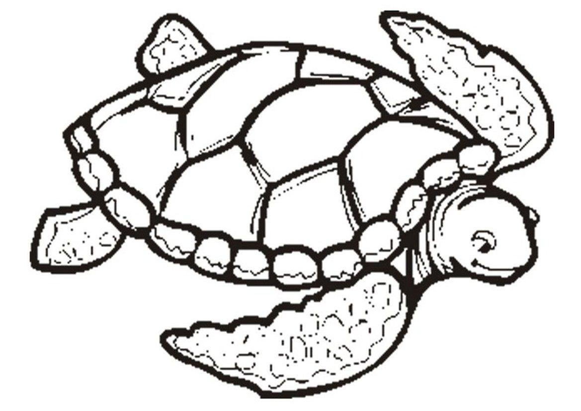 23++ Print sea turtle coloring page ideas