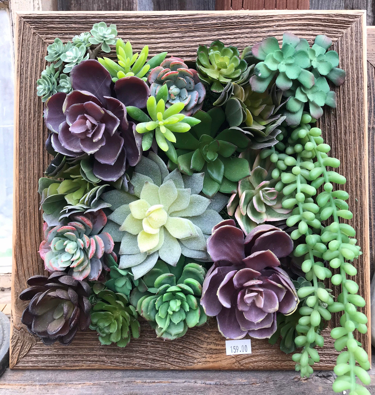 Lkoxgq3lptytym Succulent living wall planter kit