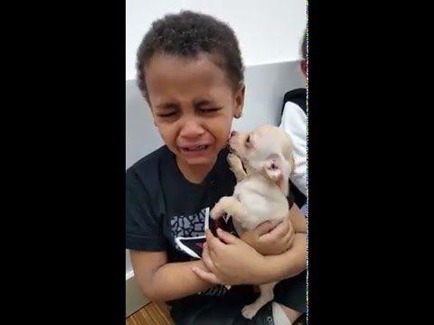 Little Boy Cries While Holding Cute Chihuahua Puppy Cute