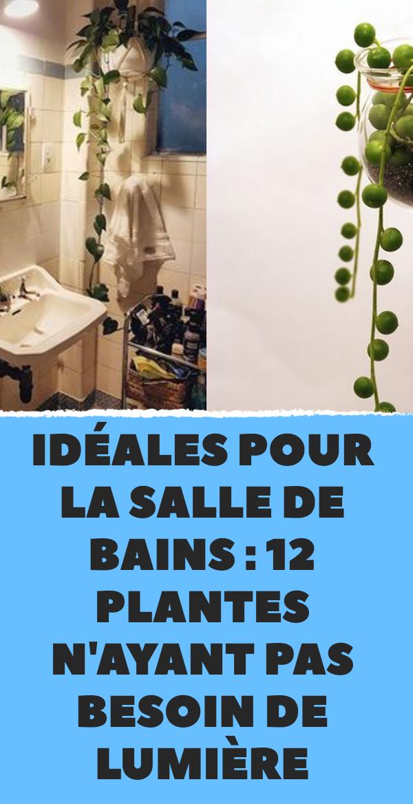 id ales pour la salle de bains 12 plantes n ayant pas. Black Bedroom Furniture Sets. Home Design Ideas