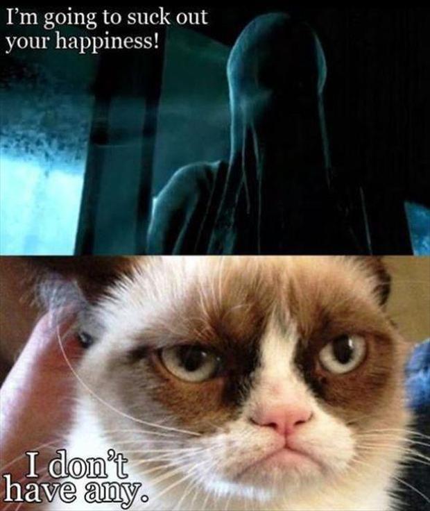Random Funny Pictures 38 Pics Funny Grumpy Cat Memes Grumpy Cat Meme Grumpy Cat Humor