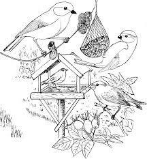Kleurplaten Watervogels.Marjolein Bastin Kleurplaten Google Zoeken Kleuren Voor