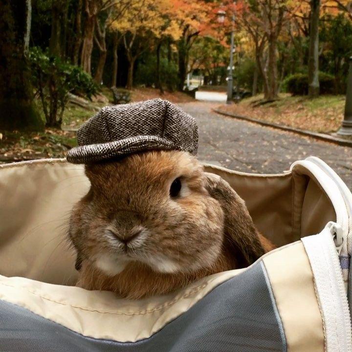 Кролик фото приколы