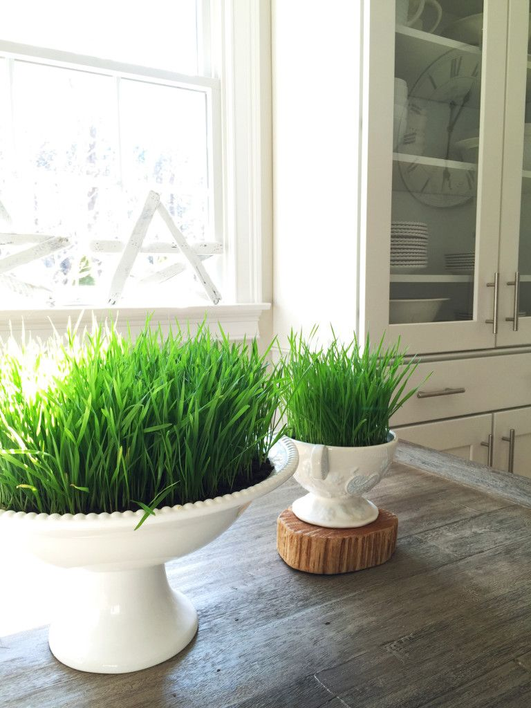 How To Get Green Grass In Spring