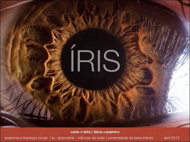 Anatomia e Fisiologia Ocular - Iris e Pupila | Medicina II ...