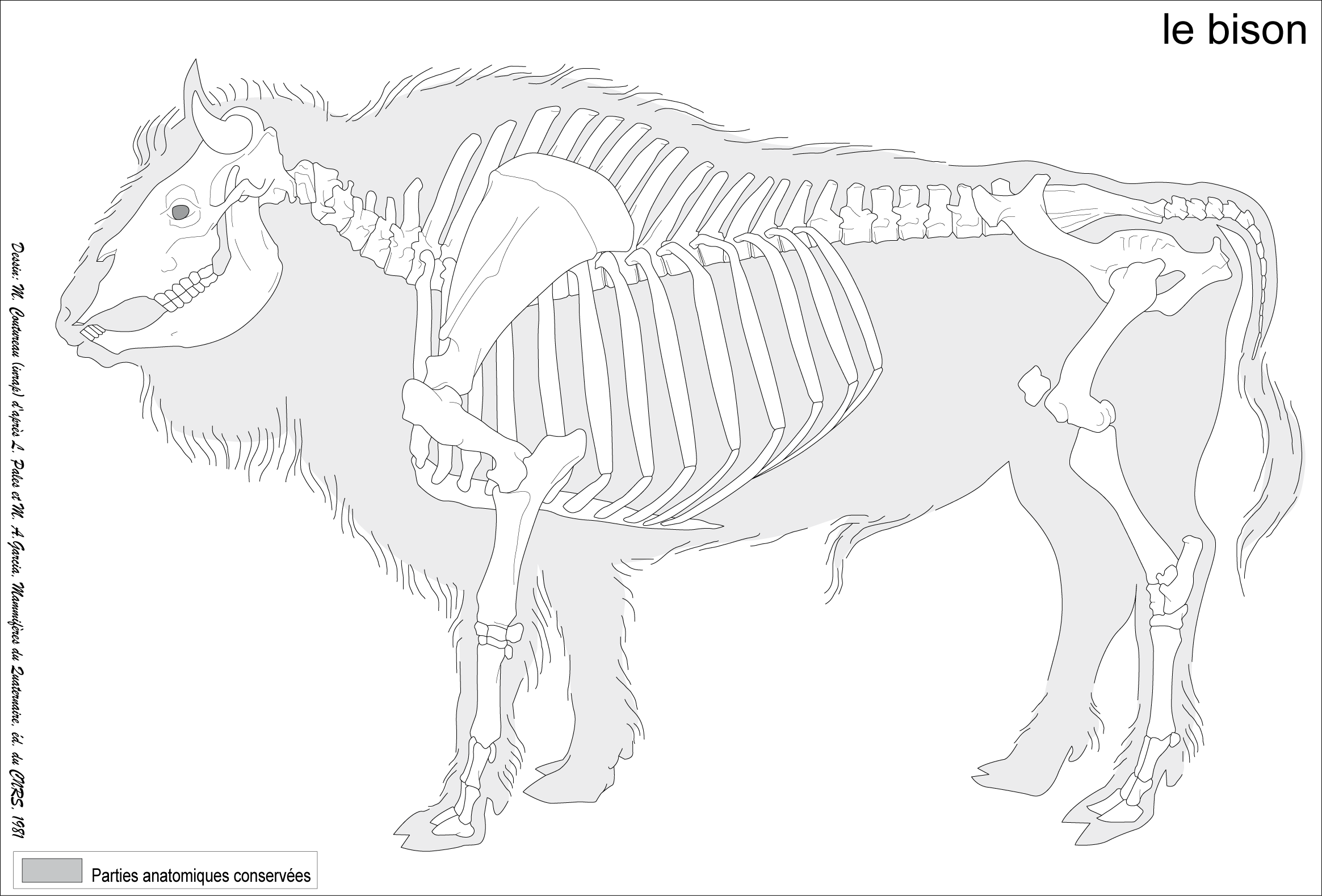 скелет быка картинки его жизни метро