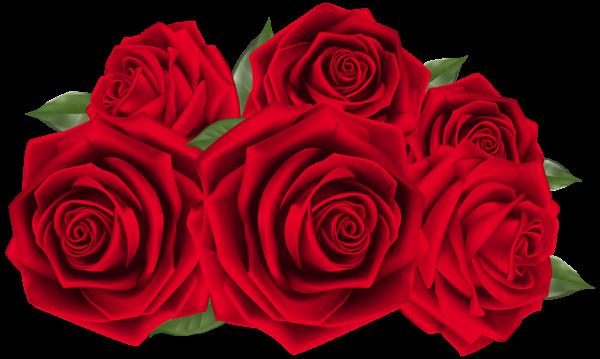 Beautiful Dark Red Roses PNG Clipart Image