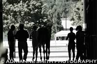 Scene from a Horse Show - Adrianne Smith Photography