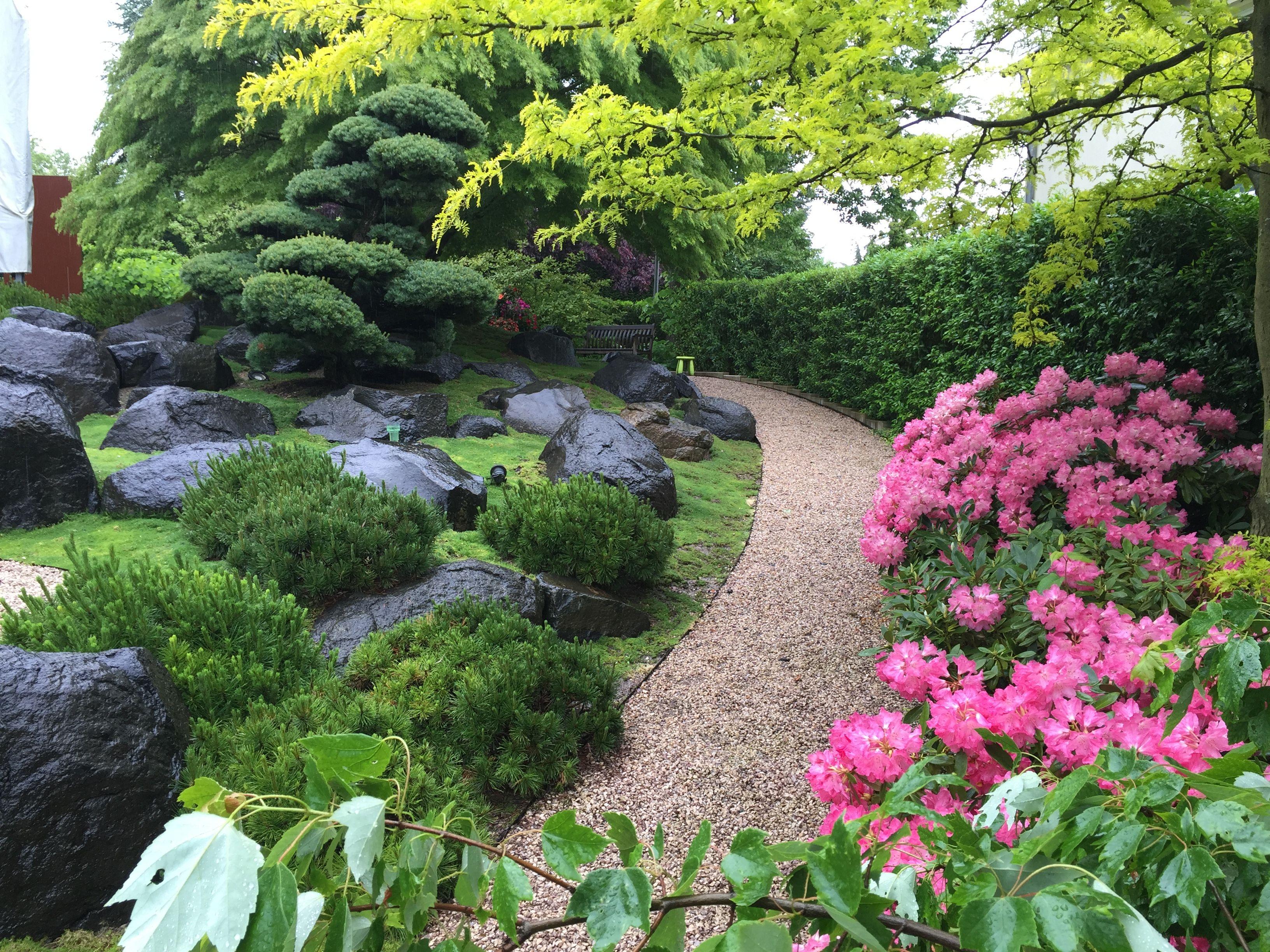 sommerstimmung im asiatischen stil rhododendron kissenf rmige kiefern und findlinge entlang. Black Bedroom Furniture Sets. Home Design Ideas