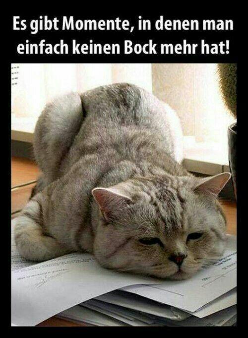 Pin von 1pic4u auf ♡ Guten Morgen ♡ Good Morning ♡ | Cats ...