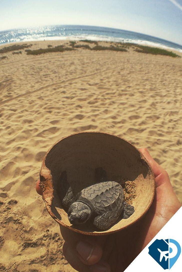 """La liberación de Tortugas"""", es una experiencia inolvidable,  sé parte del cuidado de una especie en peligro de extinción. Puerto Escondido, Oaxaca"""
