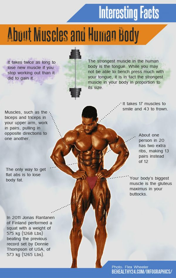 Interesting Facts About Muscles And Human Body Free Infographic Share It On Your Website Http Behealthy24 Com I Human Body Facts Fitness Facts Human Body