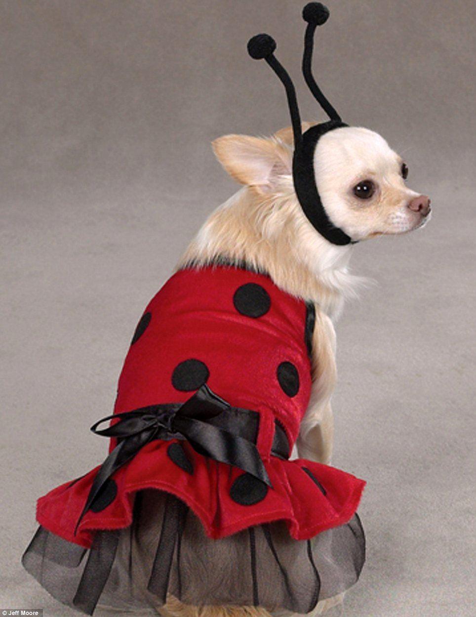 основы современного костюмы для собаки картинки швы, наложенные при