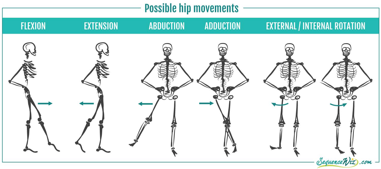 Hip Movements | Anatomy | Pinterest