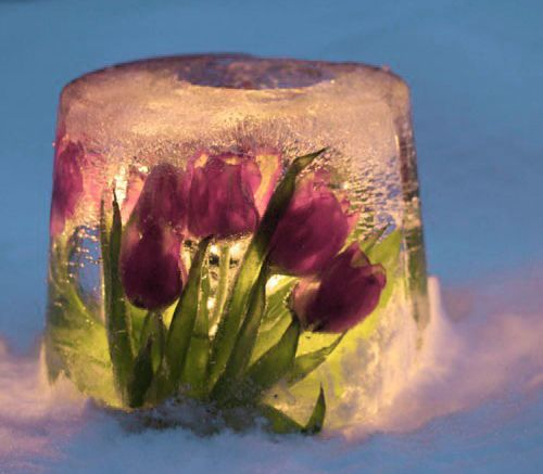 Ice lanterns with fresh flowers