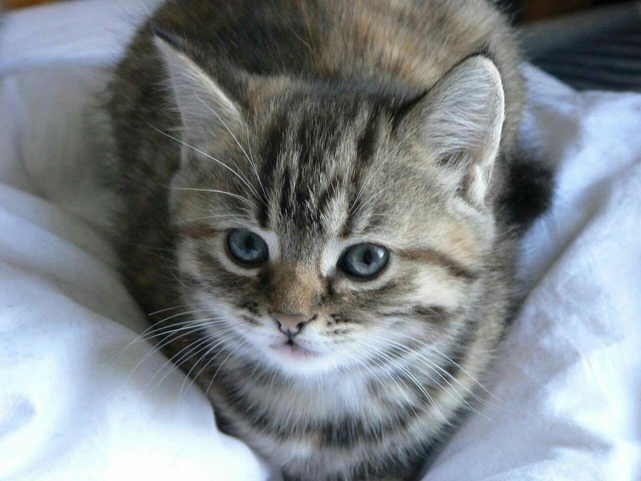 Pin by FloydAngela Gamboa on Cat Photos Cute cat names