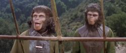 Archives Of The Apes