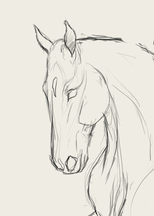 How to draw horse faces | Horse drawings, Sketches, Horse sketch