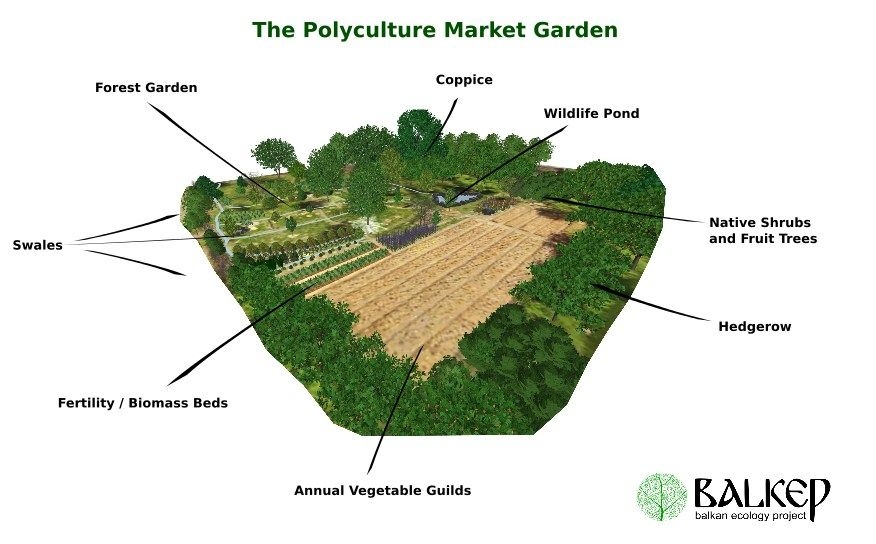 //www.balkep.org/the-polyculture-study.html | Permaculture ... on rock gardens landscaping designs, kitchen floor plans and layouts, rock garden plans and designs, raised garden plans and designs, rose garden plans and designs, edible garden ideas and designs, kitchen remodeling floor plans, shade garden plans and designs, raised bed vegetable garden fence designs, custom home kitchen designs, landscape for shade rock garden designs, cottage garden plans and designs,