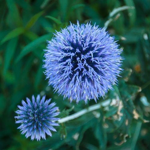 Fleur Bleue Liste Ooreka Flowers Pinterest Flowers Garden