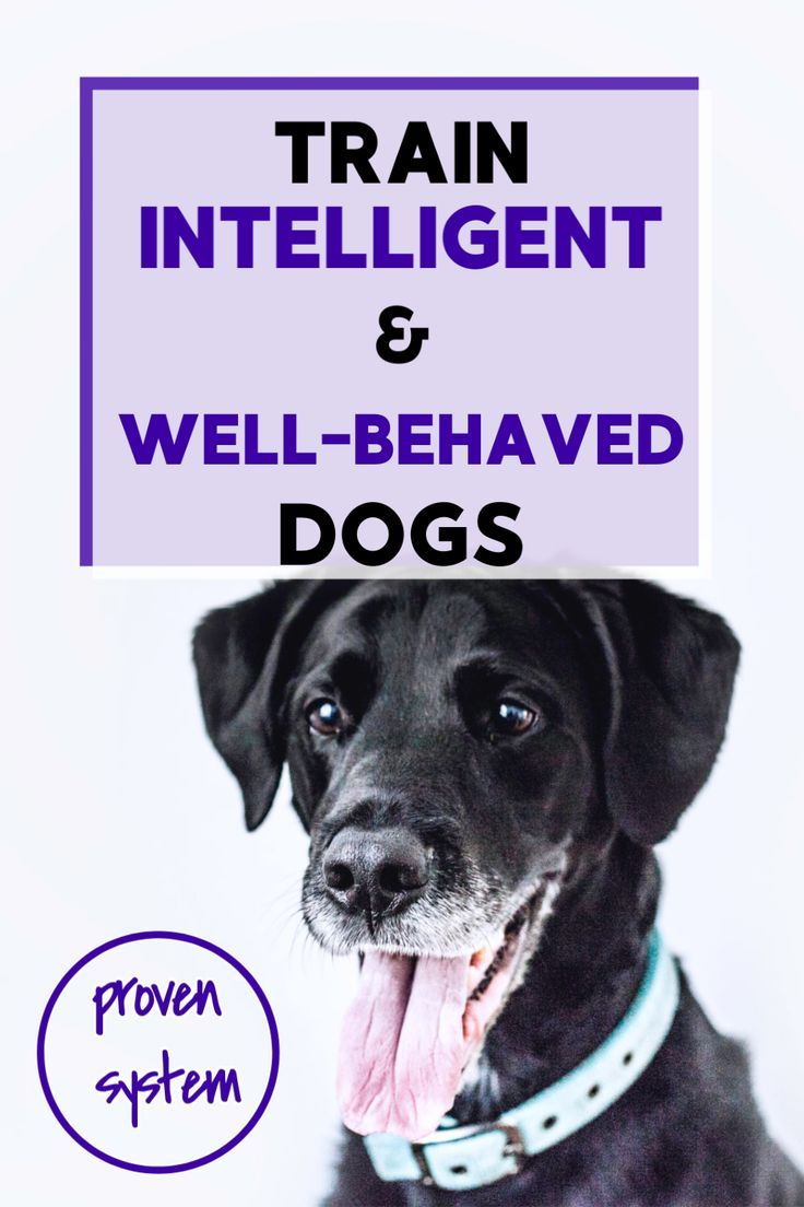 Proven System to Train WellBehaved Dogs in 2020 Dogs