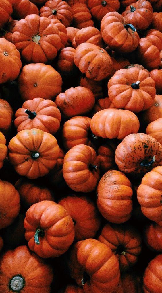 chürbissuppe | Herbst hintergrundbild, Herbst hintergrund, Hintergrundbilder herbst