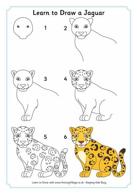 Use This Jaguar Directed Draw With Our Rainforest Habitat Unit Rh Pinterest  Com Jaguar Life Cycle Chart Baby Jaguar Animal Life Cycle