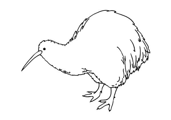 Amazing Animal Kiwi Bird Coloring Pages Download Print Online Coloring Pages For Free Color Nimbus Bird Coloring Pages Coloring Pages Kiwi Animal
