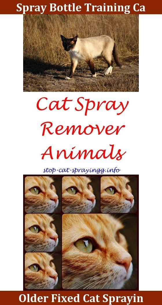 Spray Bottle Cat Discipline (With images) Cat spray