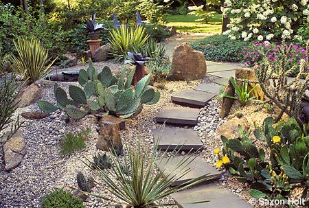 succulent garden ideas Hardy Succulents in California