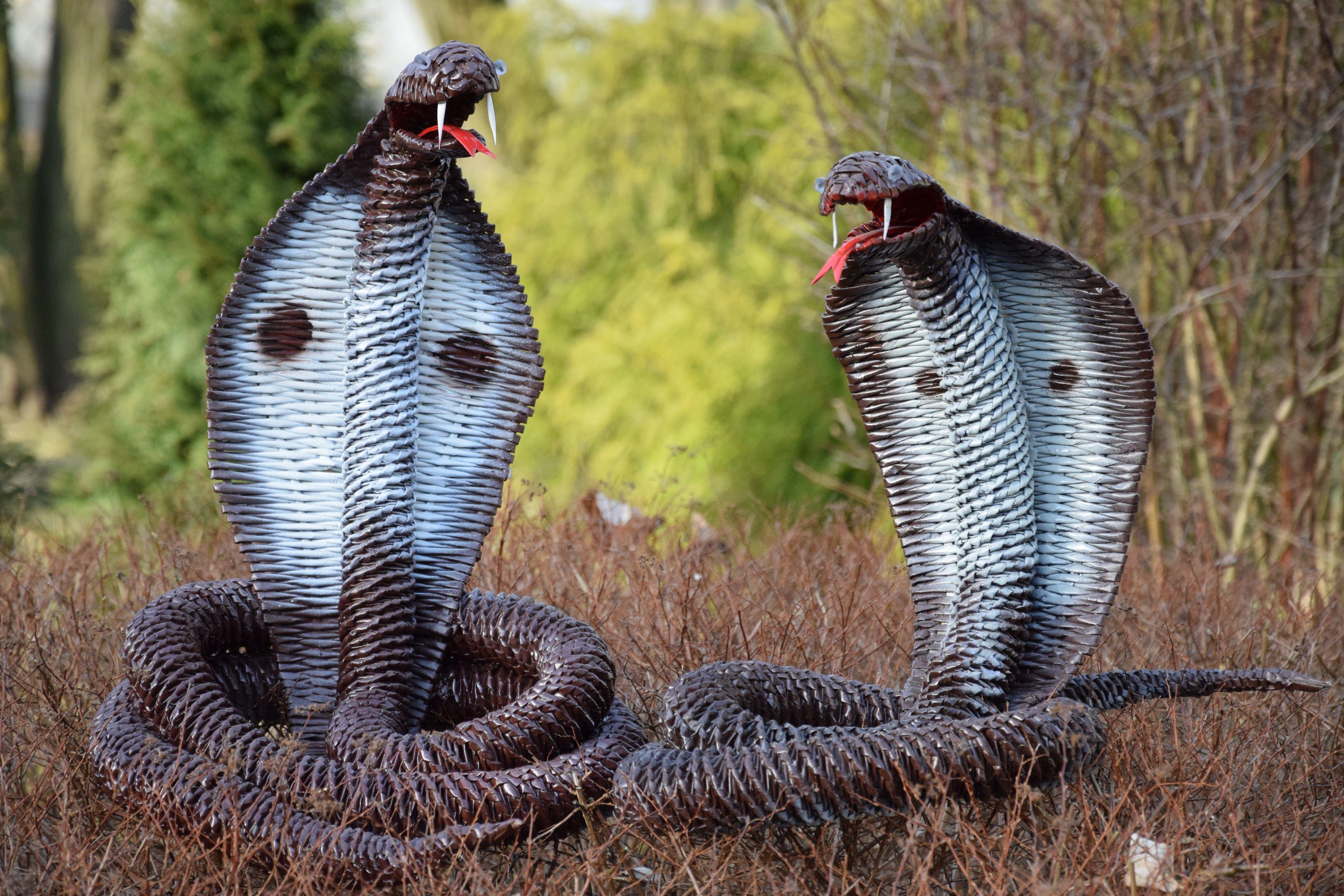 Фото подружек змей