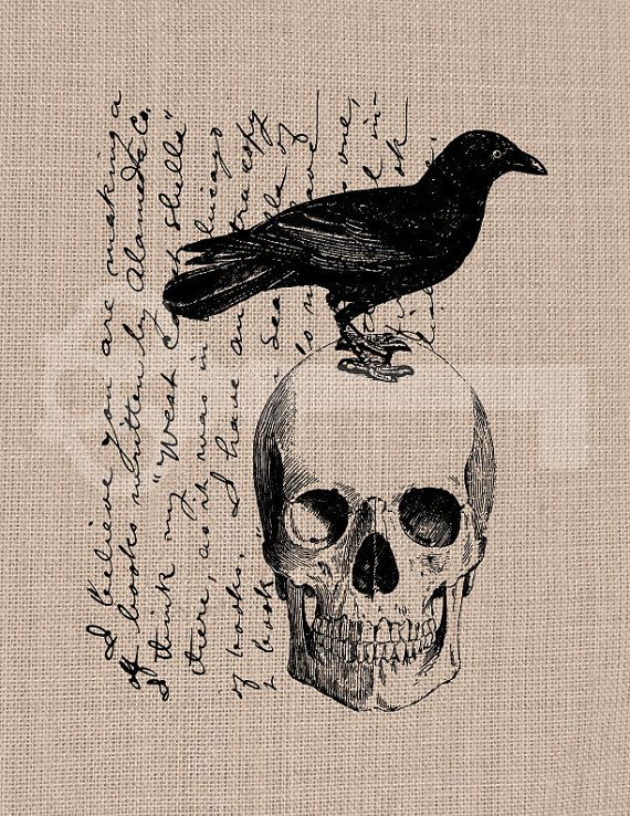Raven Script Skull Crow Graphic Digital Clipart By Tanglesgraphics 1 00 Crows Drawing Graphic Digital Clip Art
