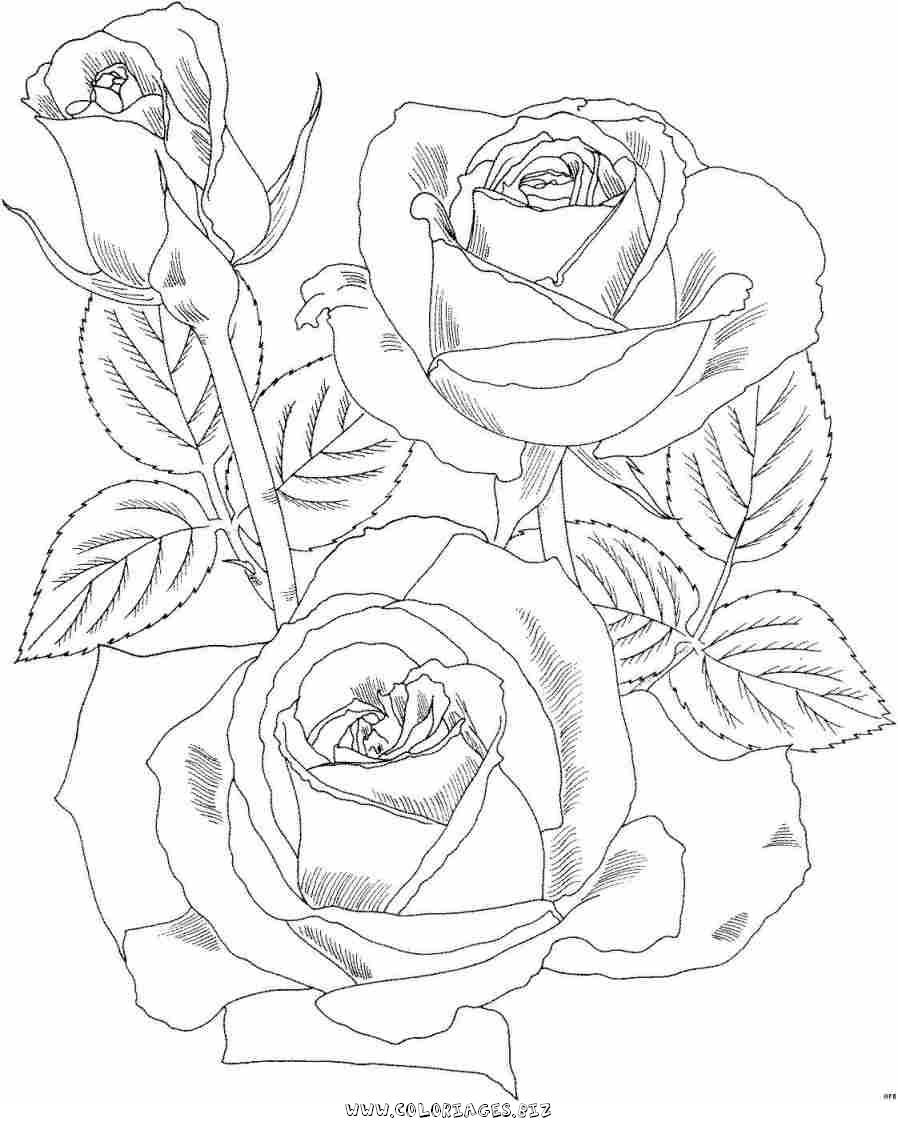 Coloring pages of roses - Roses