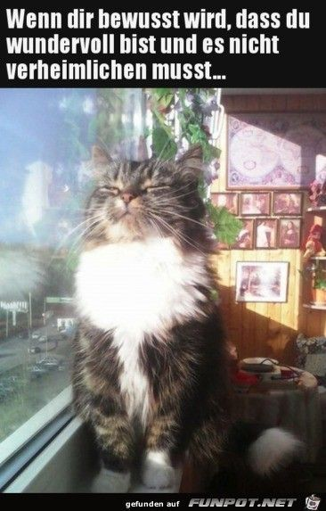 Wunderbar Wunderbar Katzen Lustige Spruche Spruche Tiere Katzen