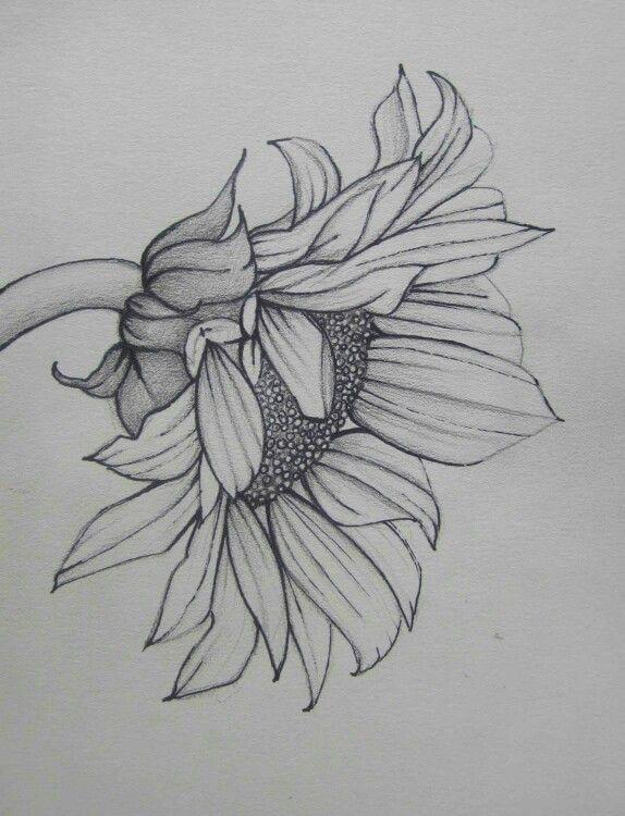 Pin De Egv En Dibujar Drawing Dibujos Girasoles Dibujo