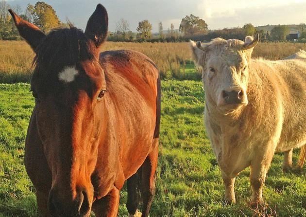 Dr Andrew Jones On Animals Friends Animals Horses