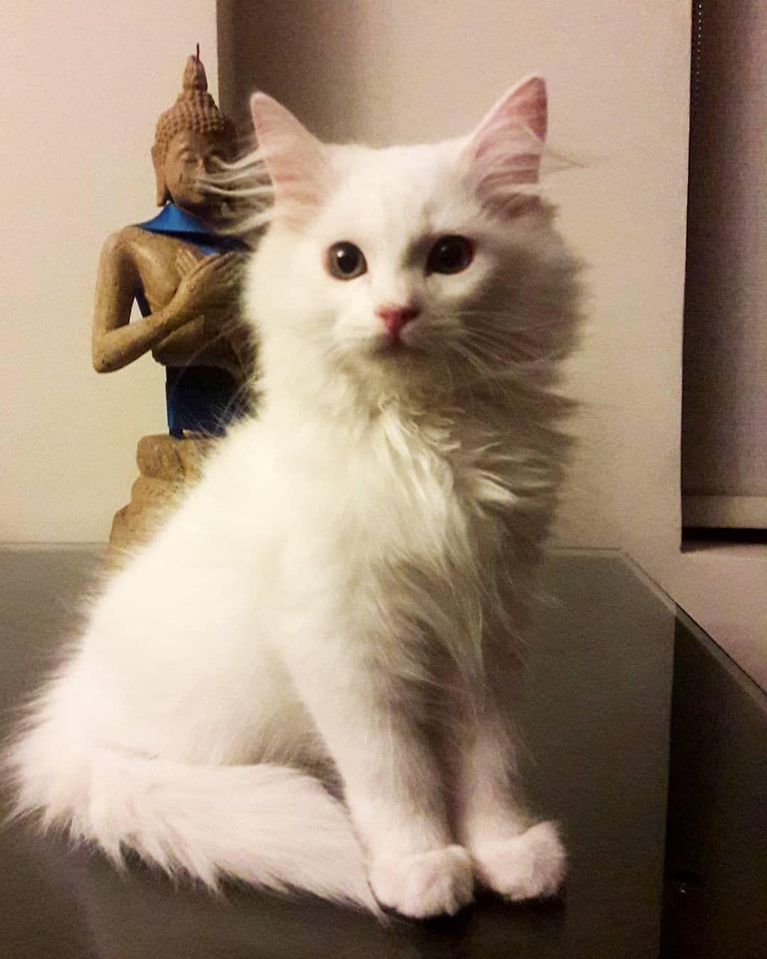 Happy furfriday everyone!! #persiancatstagram #persiancatlovers #youtuber #catloversclub #cats_of_instagram #catsworld...