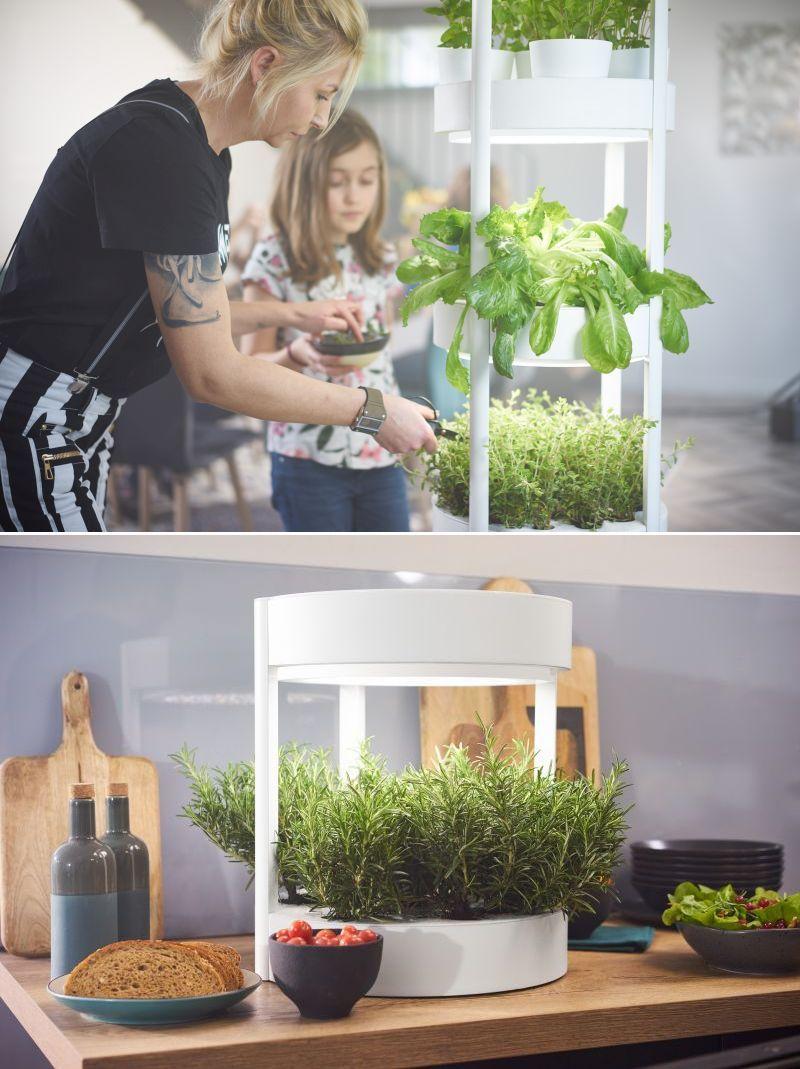 Verdeat Automated Hydroponic Indoor Garden Grows Veggies 640 x 480