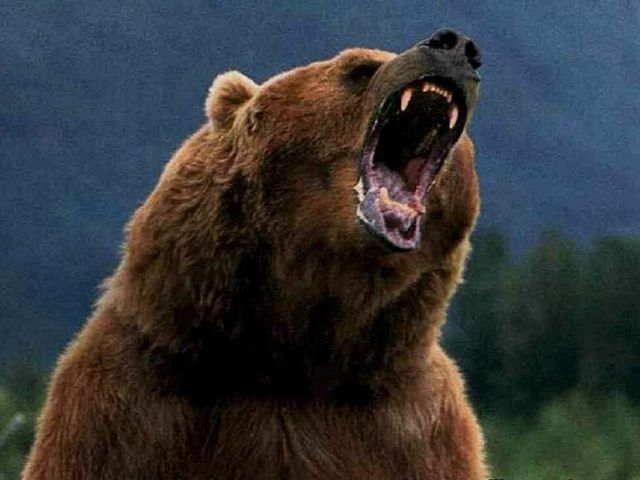 What Color Is Your Anger Bear Stuffed Animal Grizzly Bear Bear