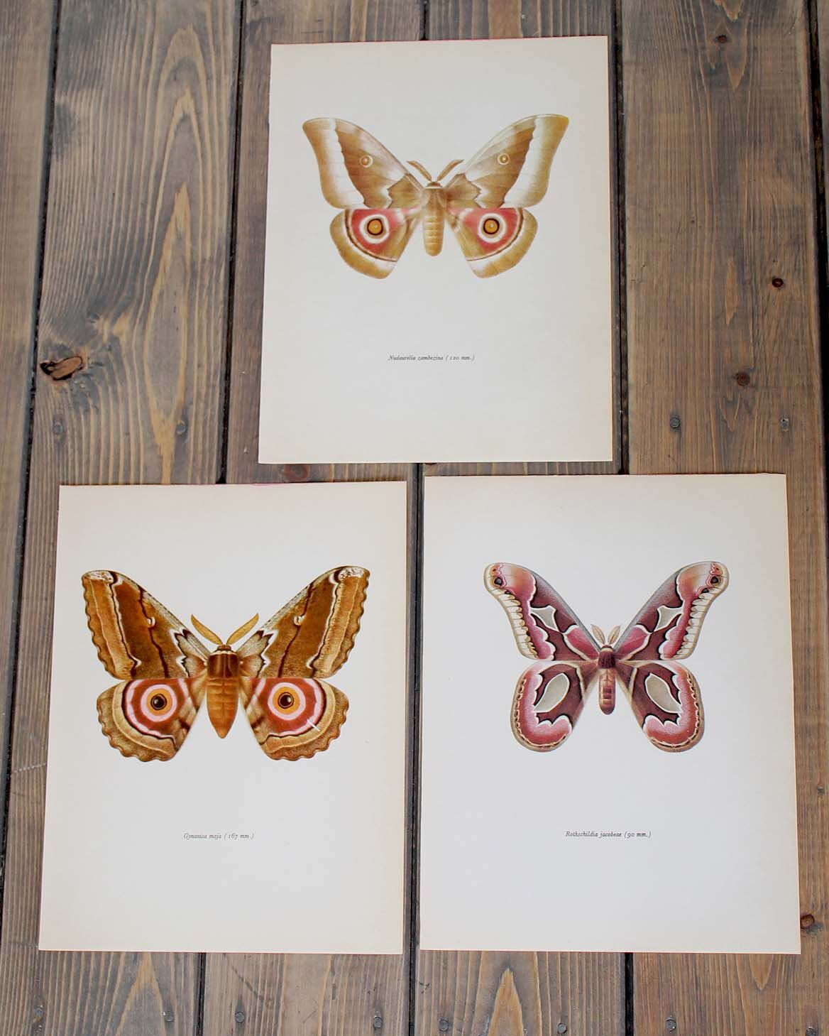 Trio of vintage moth prints perfect for framing. Unique wall art ...