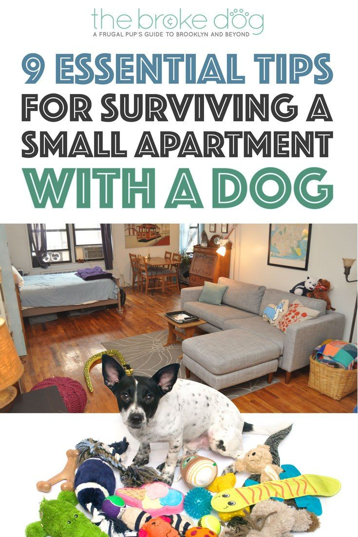 Do You Share A Small Apartment With Dog It Doesn T Have To Be Stressful Here Are Nine Essential Tips Make Easier For Both Of