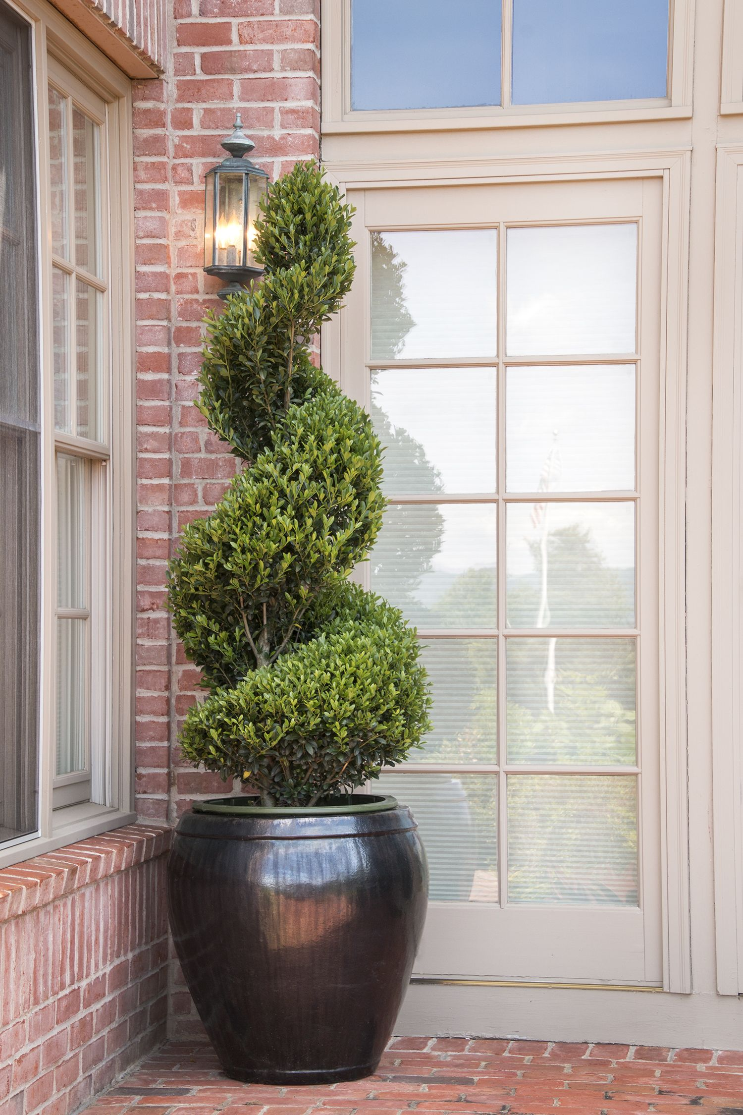 Emerald Colonnade Holly is a versatile shrub tolerant of shearing, making  it an ideal topiary. Use them singularly or as a pair for a formal accent  to ...
